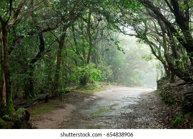 Forest in the Anaga mountains in Tenerife, Spain