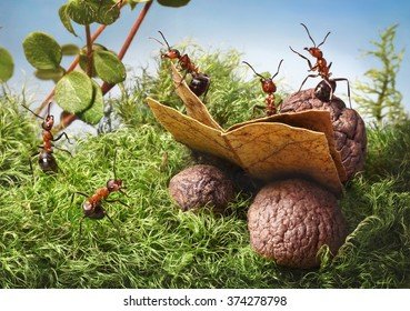forest ants read book