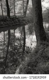 Wald um einen kleinen Fluss in Österreich