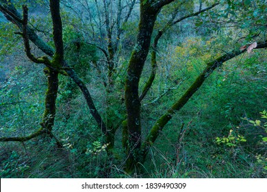 Forest around Peñalandros waterfall in the Angulo Valley within the Mena Valley municipality in the Merindades region of the province of Burgos in Castilla y Leon of Spain, Europe - Shutterstock ID 1839490309