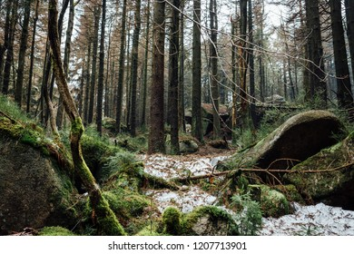 Forest atmosphere in the mystic Harz mountain forest