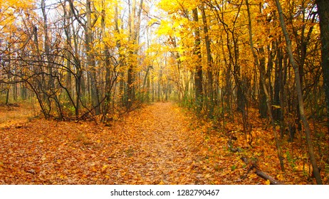 forest atumn yellow