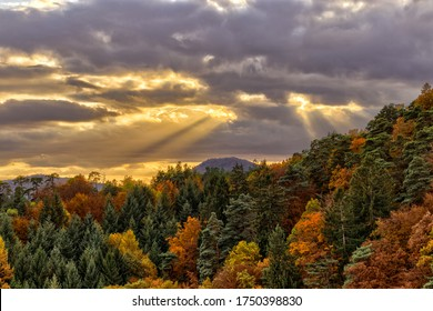 Forest with autum colored leafs under dramatic sky multi colored
