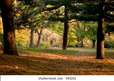 a forest in autumn