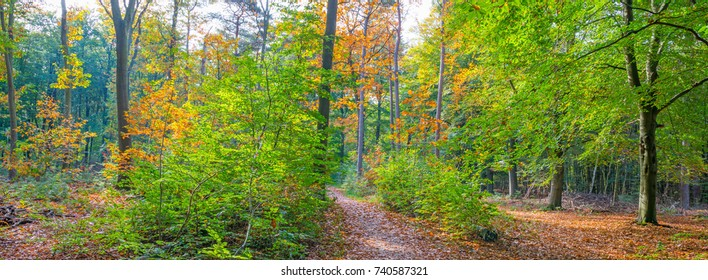 Forest in autumn colors in sunlight at fall