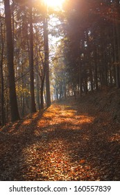 Forest in autumn colors in Transylvania
