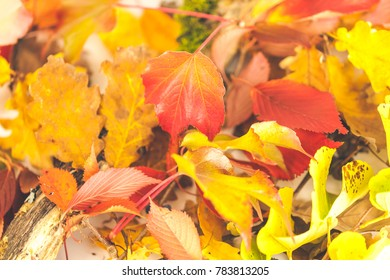 Forest in autumn and falling Autumn leaves