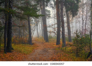 Forest. Autumn. Fog. Autumn painted leaves with its magical colors. Morning fog makes the forest mysterious and magical.