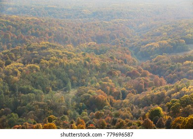 forest in the autumn with haze