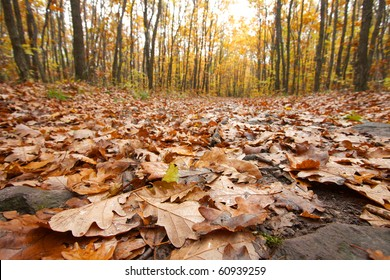 forest in autumn with leaves fallen on the ground