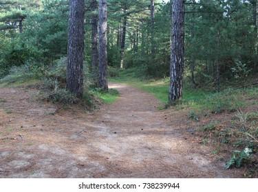Forest in autumn, national park kennemerland zuid