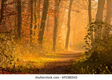 Forest in Autumn With Orange And Yellow Colors And a Walker in The Background