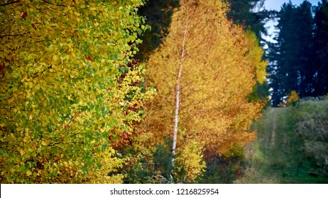 Forest autumn photography. Beautiful colors.