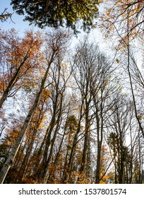 Forest in autumn at Rtanj Mountain