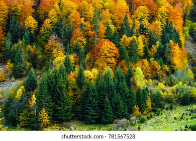 forest in autumn season