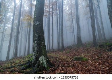 Forest at autumn season and mist