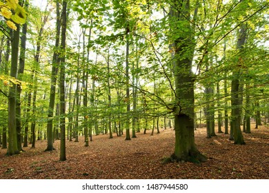 Forest in the autumn in the sunny day