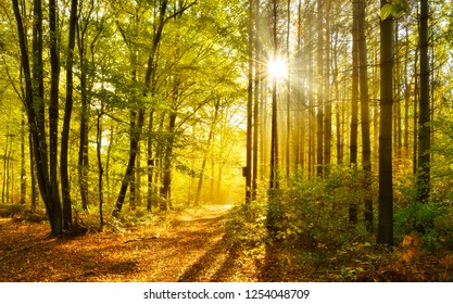 Forest in Autumn, warm light of the rising sun breaking through morning fog