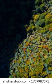 Forest in autumn within the Tobia River Valley in La Rioja Autonomous Community of Spain in Europe
