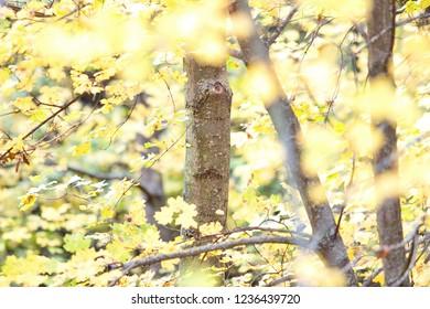 forest background in autumn