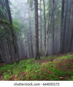 Forest as a background. Beautiful natural landscape in the spring time