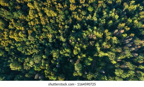 Forest background. Drone point of view.