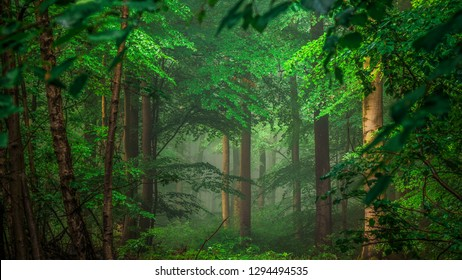 forest background HD
