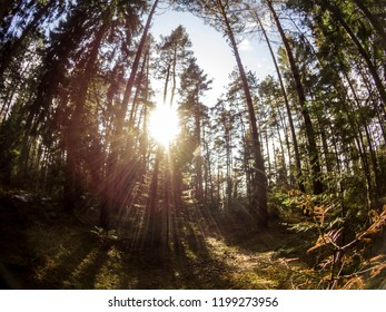 Forest backlight landscape on fisheye photo