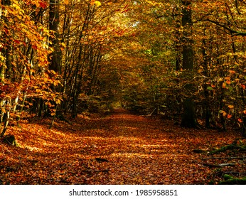 Forest of Bad Homburg in autumn, Hesse, Germany