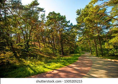 forest at the Baltic coast in Poland with light and shadow