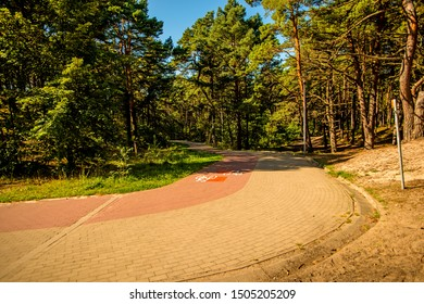 forest at the Baltic coast in Poland with way for bicycles and pedestrians