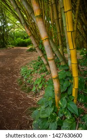 Forest Of Bamboo And A Path