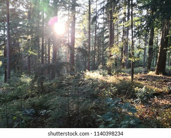 Forest bathing shinrin-yoku