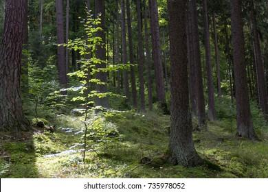 a forest in bavaria next to schwandorf in summer