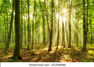 500 Green Forest Pictures Royalty Free Images Stock Photos And