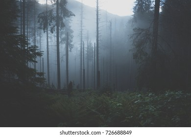 Forest before sunset