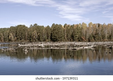 A forest behind an open body of water.