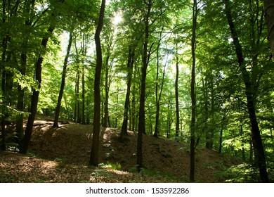 Forest in Berlin