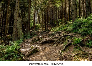 Forest in Beskidy Mountains