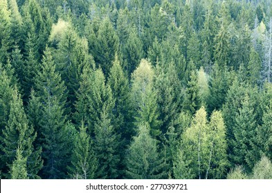 Forest from the bird eye