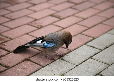 The forest bird a jay costs on a red stone blocks.