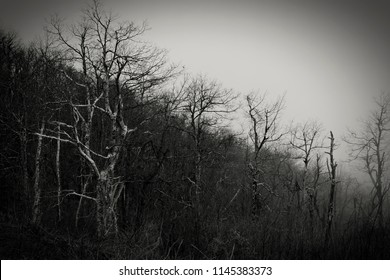 Forest in Black and White with soft vignette and dim sky