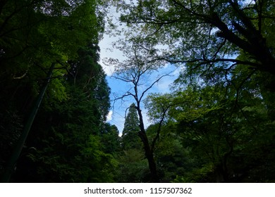 In the forest Blue sky Dark landscape