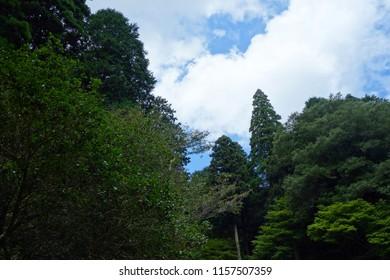 Forest blue sky natural