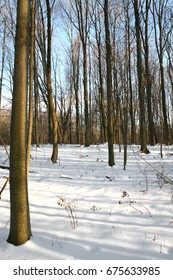 Forest with blue sky and snow in winter