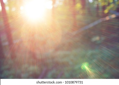 Forest blur baground. image of summer forest and sun