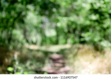 forest blurry background