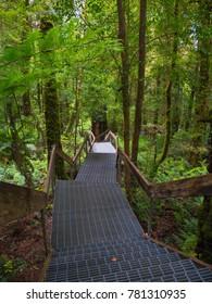 Forest board walk bush wooden walking track