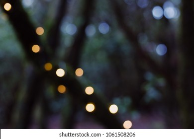 Forest bokeh holiday background. Mystery shadows and lights