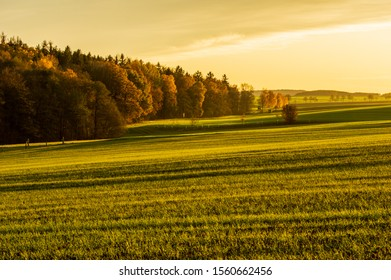 forest border with lush green pasture and colourful clouds in warm golden hour sunset light in the evening of November